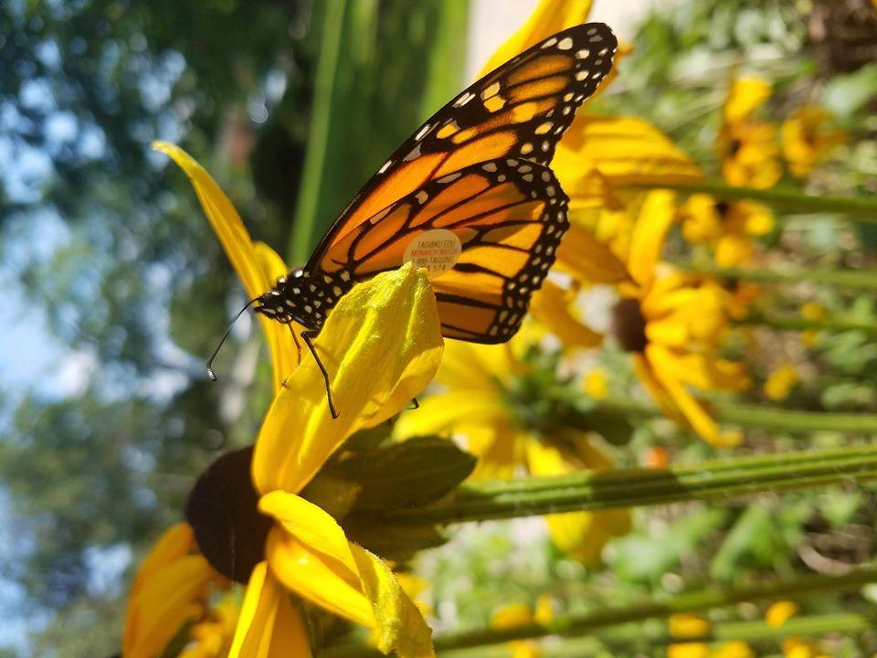 Marvelous Monarchs
