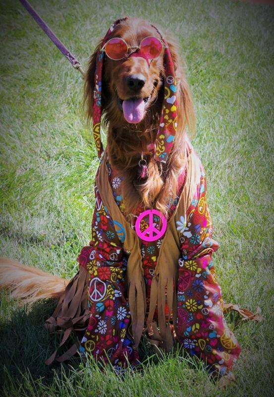 Clinton County SPCA Pet Extravaganza