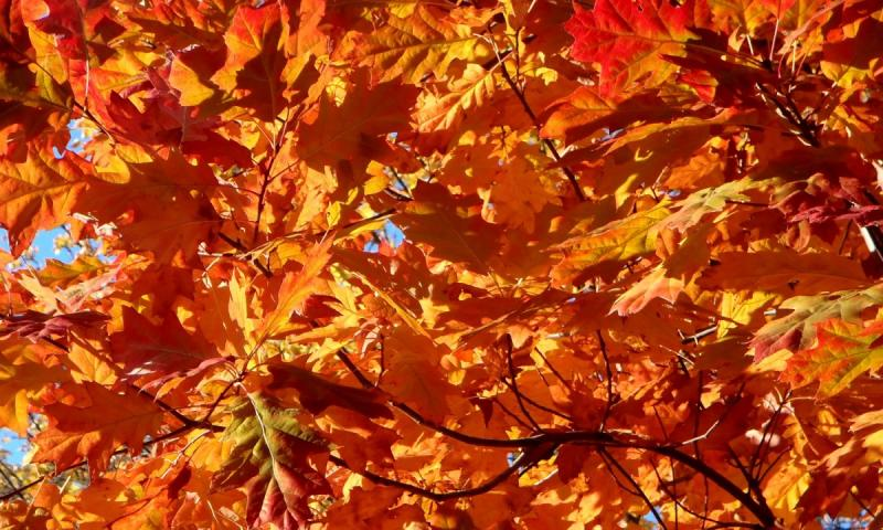 Flaming Foliage 70th Anniversary Open House